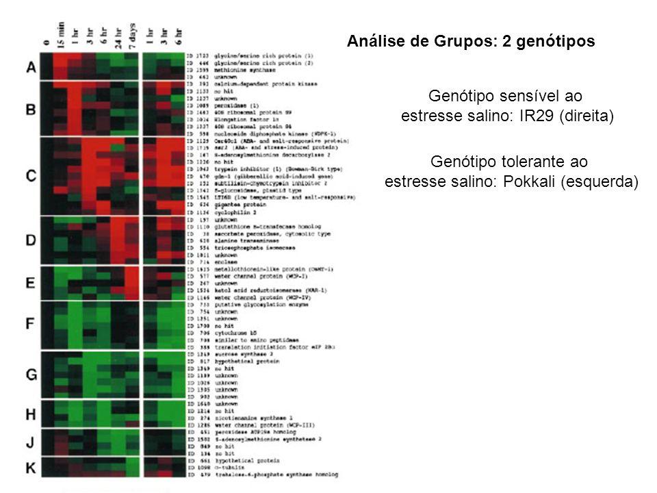 Análise de Grupos: 2 genótipos