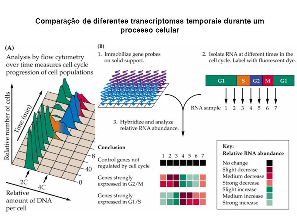 Comparação de diferentes transcriptomas temporais durante um processo celular