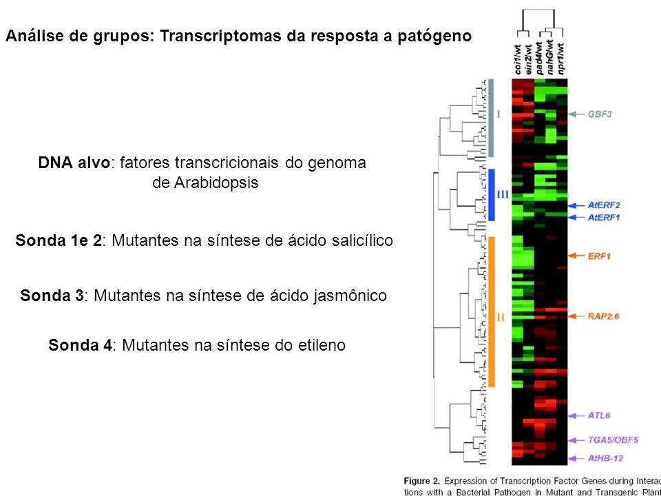 Análise de grupos: Transcriptomas da resposta a patógeno