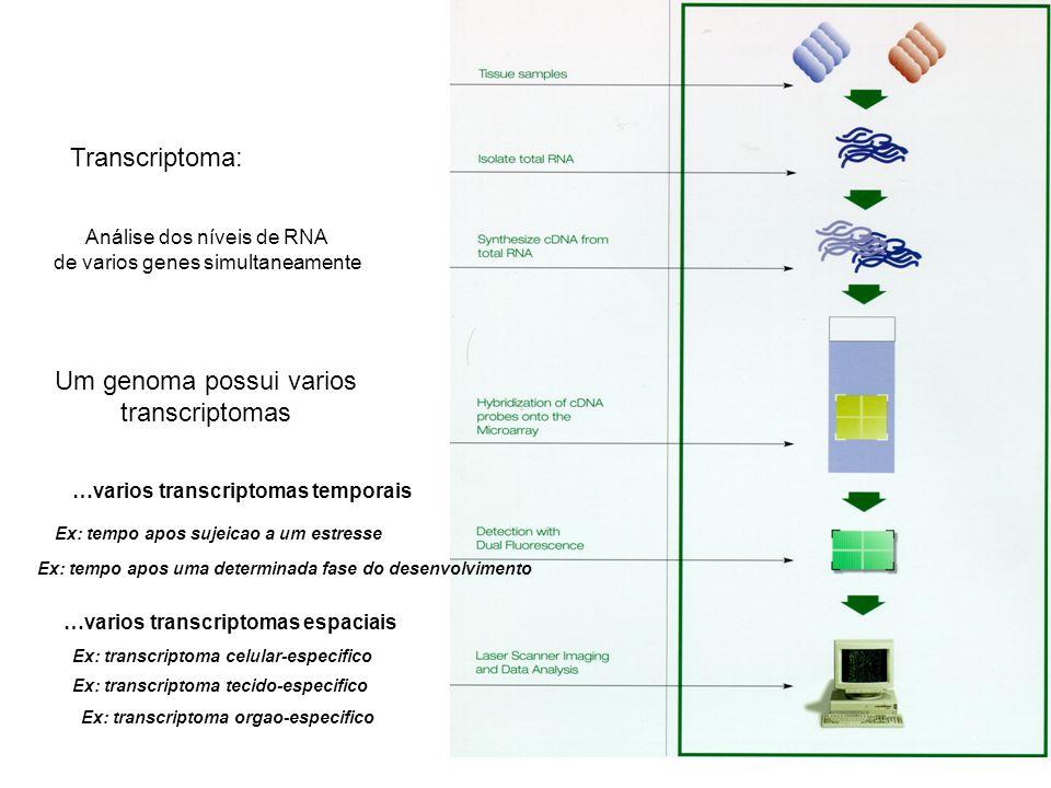Um genoma possui varios transcriptomas