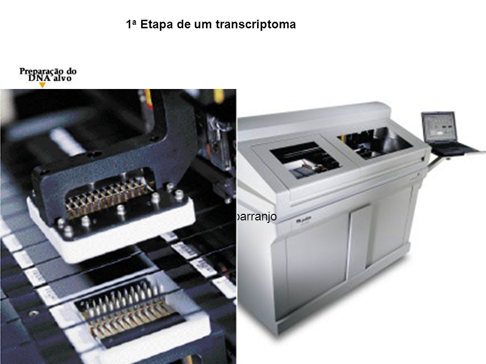 Preparacao do Micro/Macroarranjo