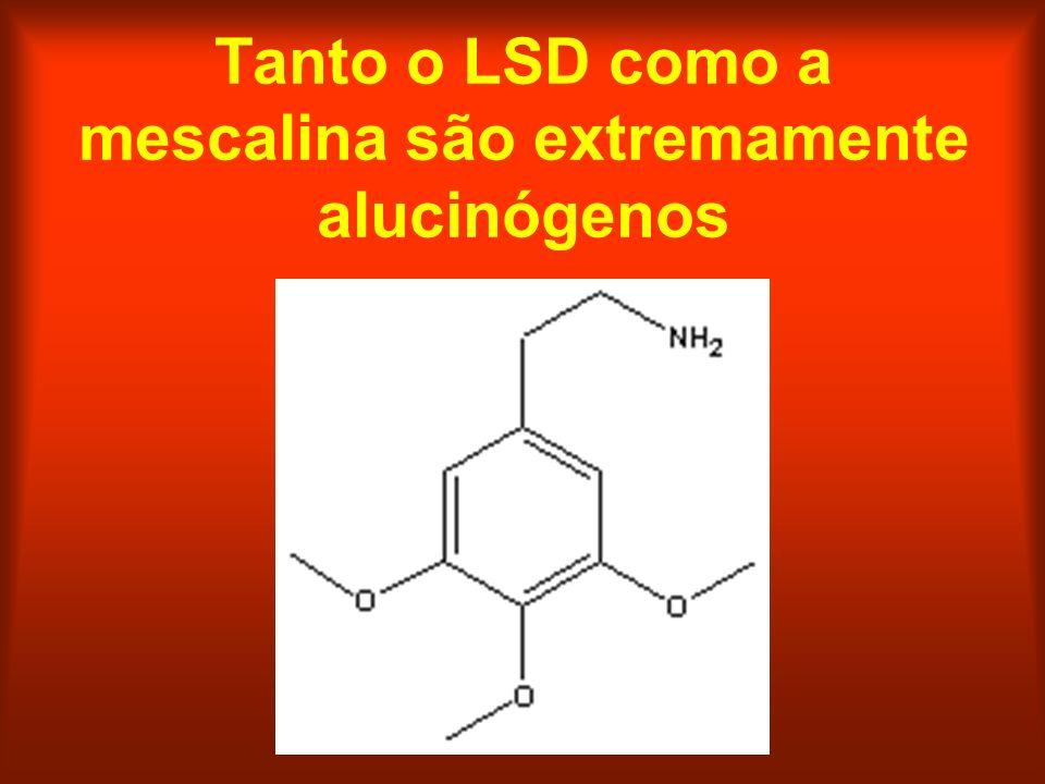 Tanto o LSD como a mescalina são extremamente alucinógenos