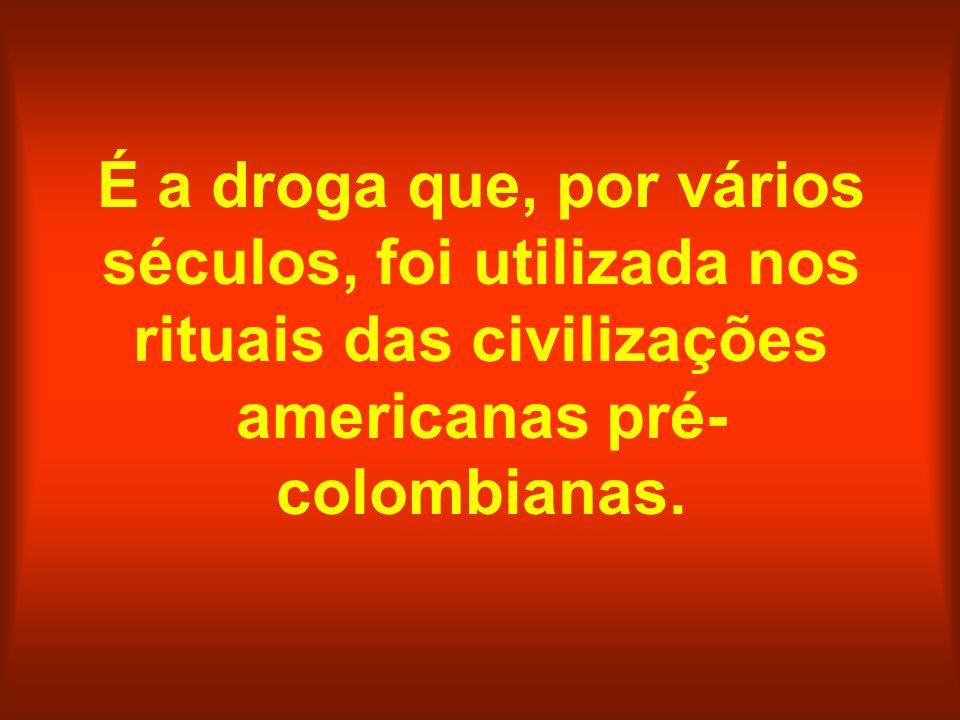 É a droga que, por vários séculos, foi utilizada nos rituais das civilizações americanas pré-colombianas.