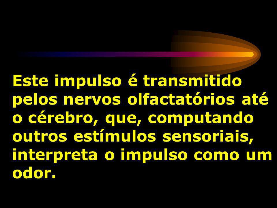 Este impulso é transmitido pelos nervos olfactatórios até o cérebro, que, computando outros estímulos sensoriais, interpreta o impulso como um odor.