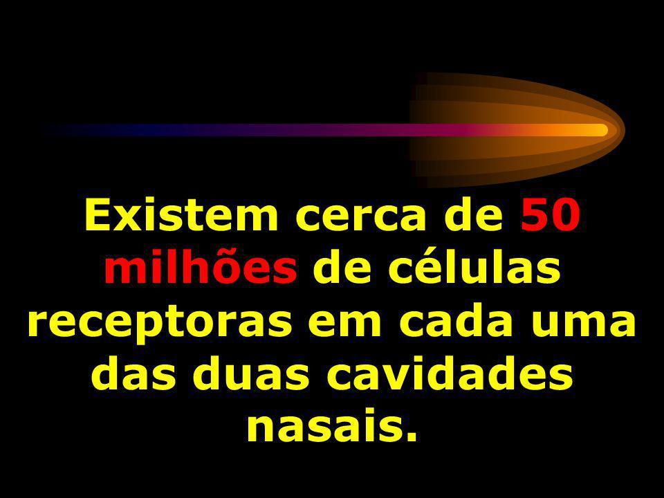 Existem cerca de 50 milhões de células receptoras em cada uma das duas cavidades nasais.