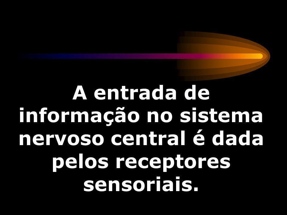 A entrada de informação no sistema nervoso central é dada pelos receptores sensoriais.