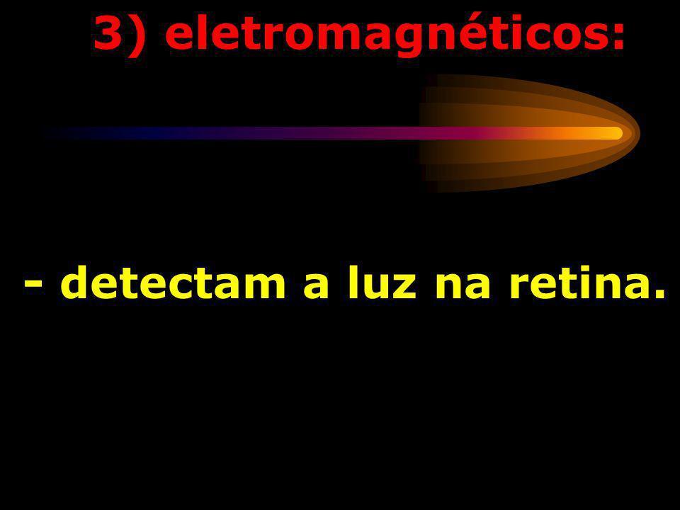 3) eletromagnéticos: - detectam a luz na retina.