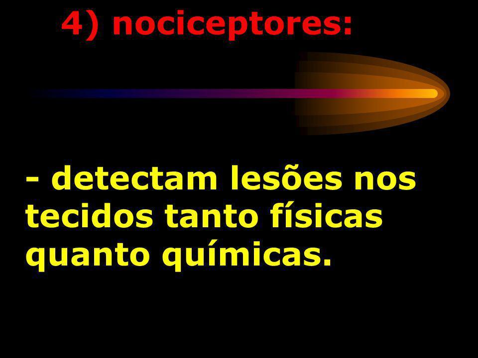 4) nociceptores: - detectam lesões nos tecidos tanto físicas quanto químicas.