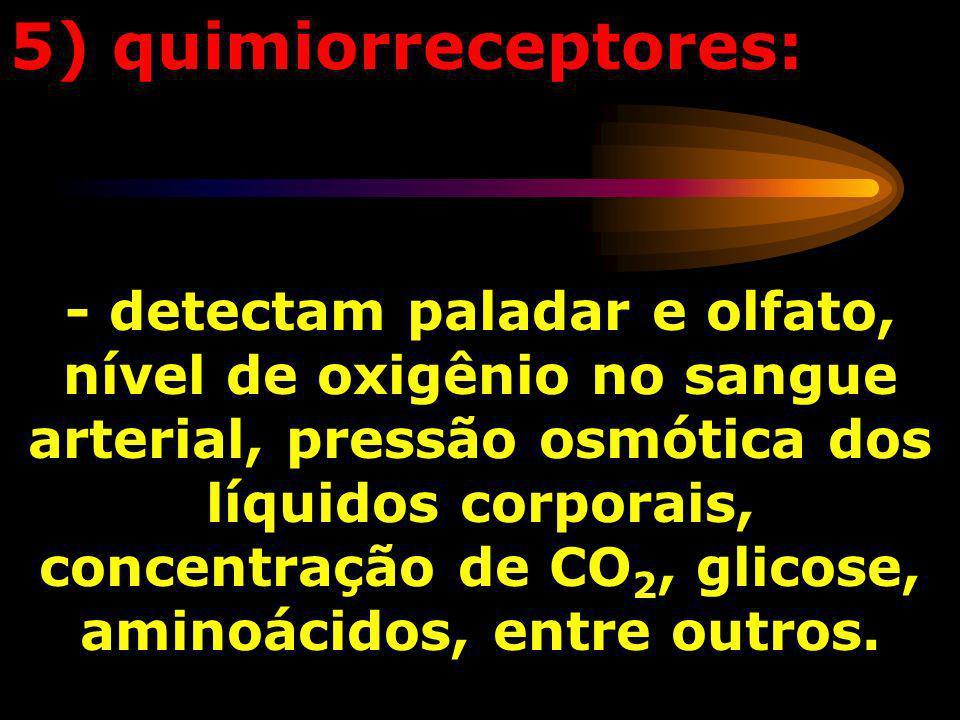 5) quimiorreceptores:
