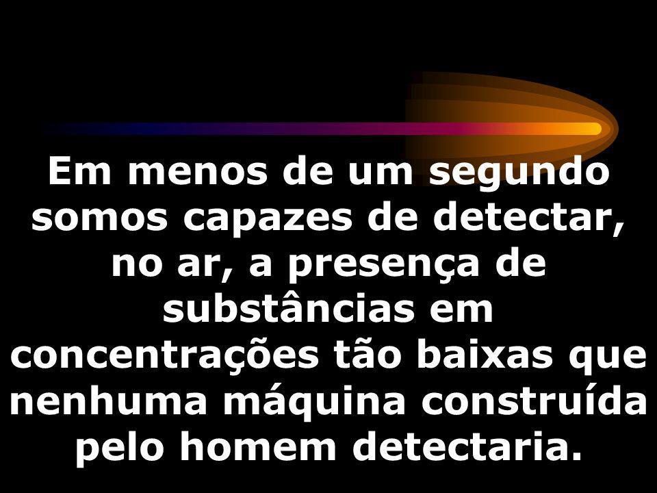 Em menos de um segundo somos capazes de detectar, no ar, a presença de substâncias em concentrações tão baixas que nenhuma máquina construída pelo homem detectaria.