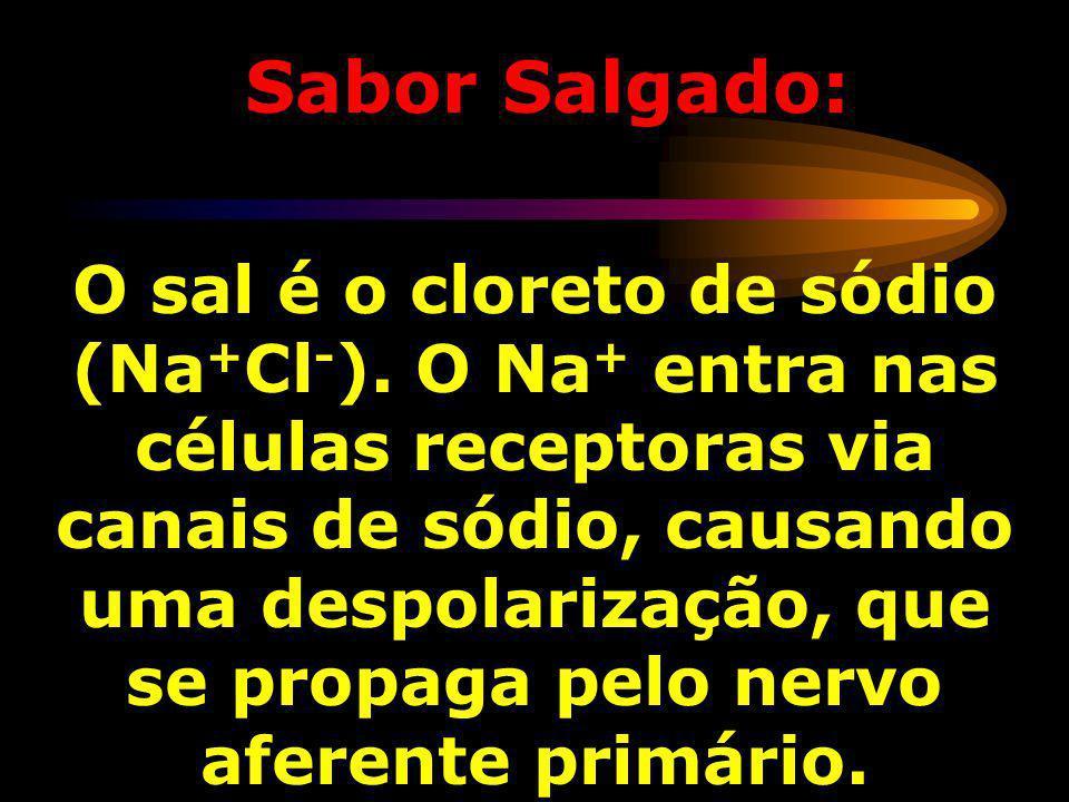 Sabor Salgado: