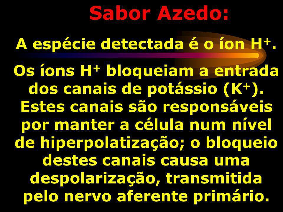 A espécie detectada é o íon H+.