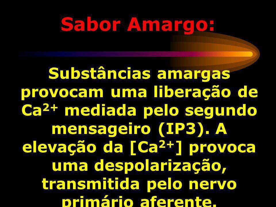 Sabor Amargo: