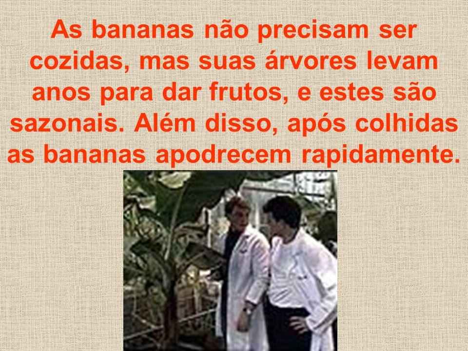 As bananas não precisam ser cozidas, mas suas árvores levam anos para dar frutos, e estes são sazonais.