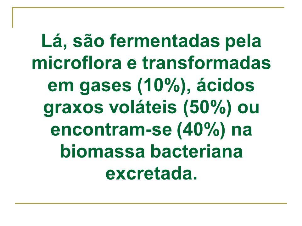 Lá, são fermentadas pela microflora e transformadas em gases (10%), ácidos graxos voláteis (50%) ou encontram-se (40%) na biomassa bacteriana excretada.