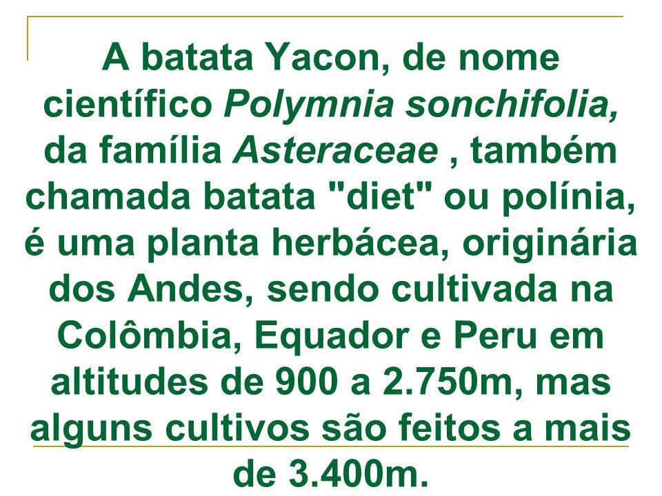 A batata Yacon, de nome científico Polymnia sonchifolia, da família Asteraceae , também chamada batata diet ou polínia, é uma planta herbácea, originária dos Andes, sendo cultivada na Colômbia, Equador e Peru em altitudes de 900 a 2.750m, mas alguns cultivos são feitos a mais de 3.400m.