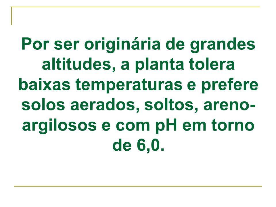 Por ser originária de grandes altitudes, a planta tolera baixas temperaturas e prefere solos aerados, soltos, areno-argilosos e com pH em torno de 6,0.