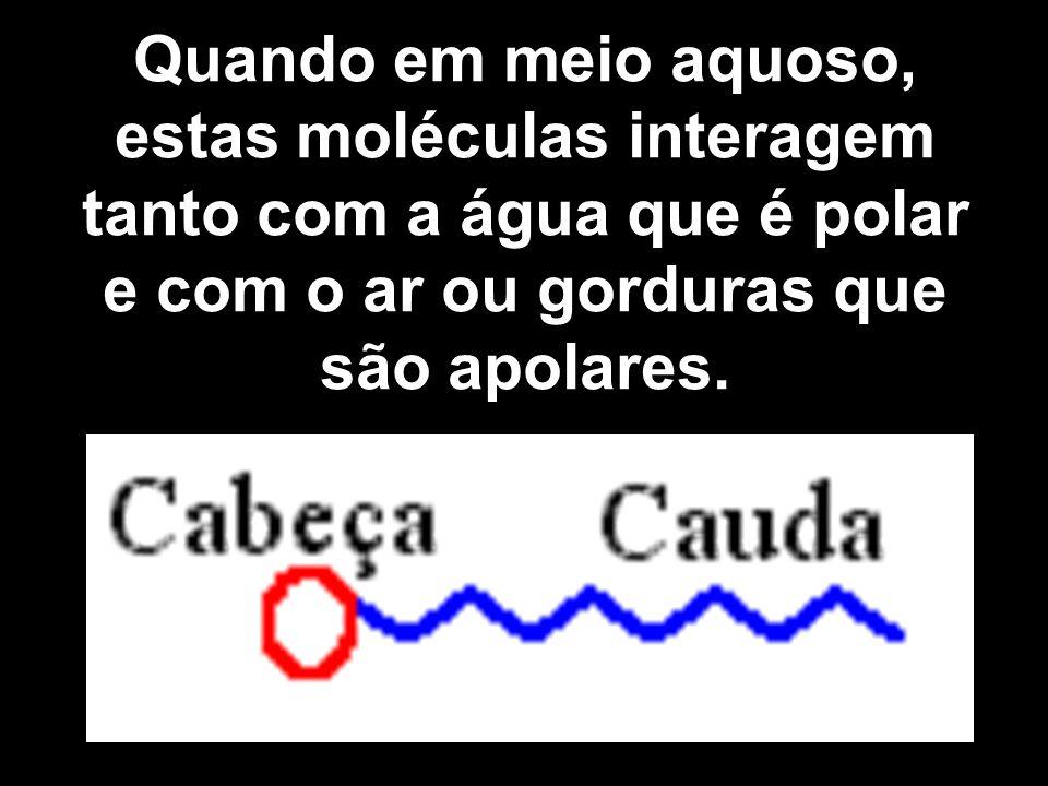 Quando em meio aquoso, estas moléculas interagem tanto com a água que é polar e com o ar ou gorduras que são apolares.