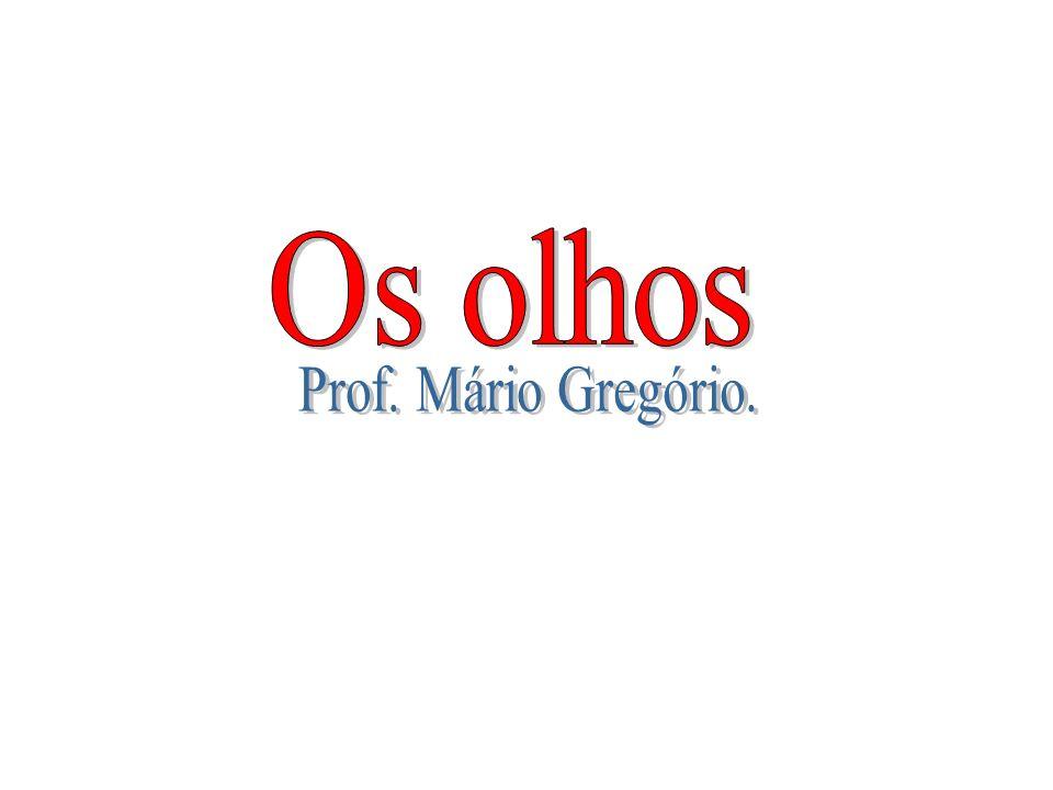Os olhos Prof. Mário Gregório.