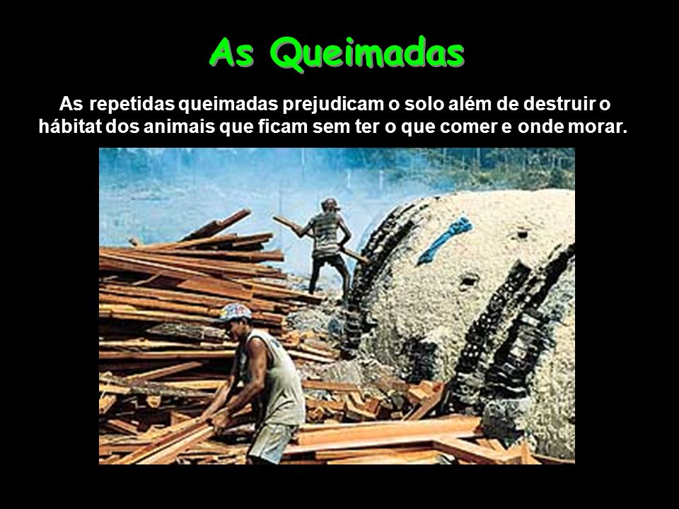As Queimadas As repetidas queimadas prejudicam o solo além de destruir o hábitat dos animais que ficam sem ter o que comer e onde morar.