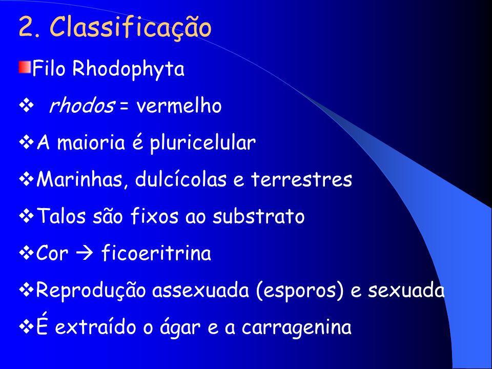 2. Classificação Filo Rhodophyta rhodos = vermelho