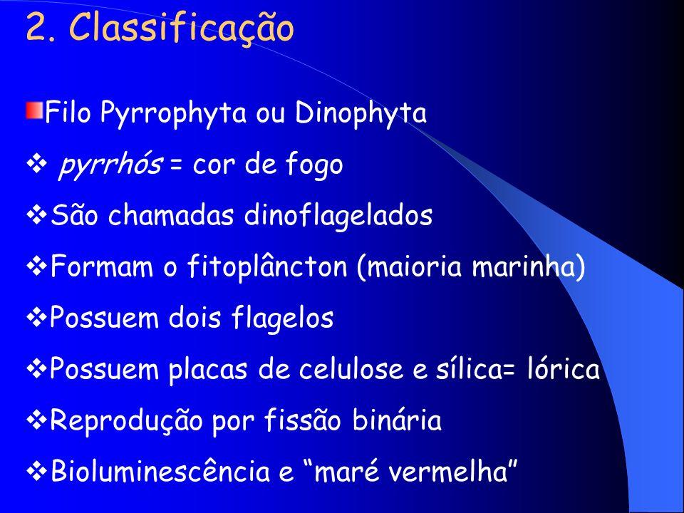 2. Classificação Filo Pyrrophyta ou Dinophyta pyrrhós = cor de fogo