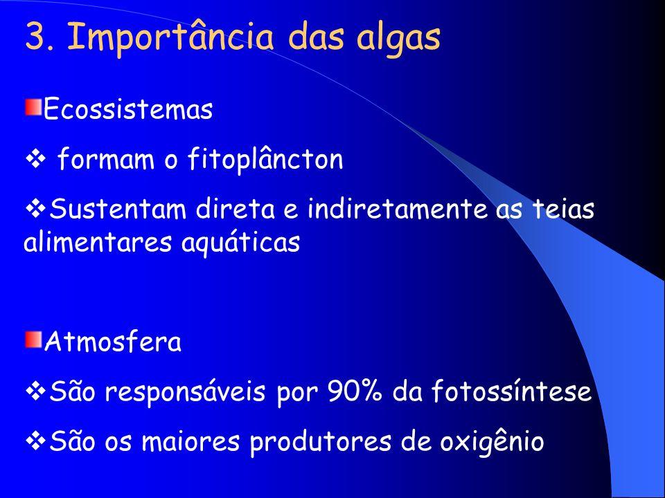 3. Importância das algas Ecossistemas formam o fitoplâncton
