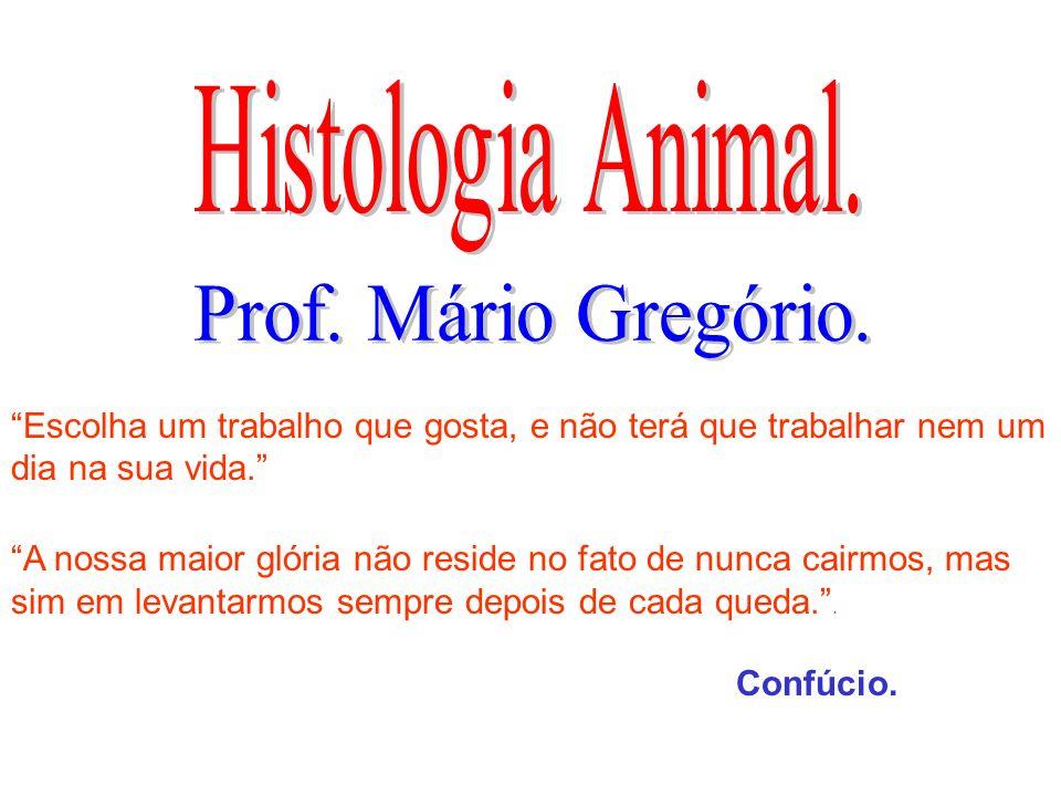 Histologia Animal. Prof. Mário Gregório.