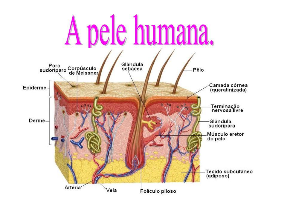A pele humana.