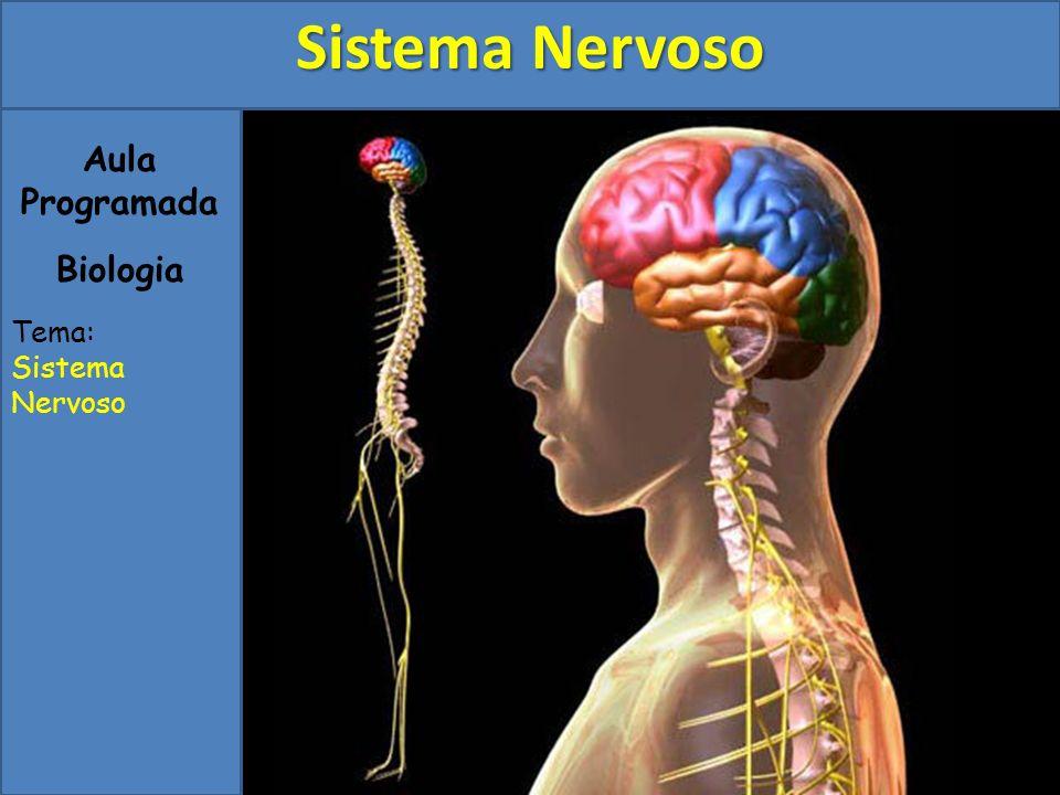 Sistema Nervoso Aula Programada Biologia Tema: Sistema Nervoso