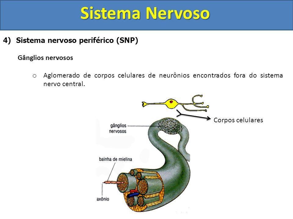 Sistema Nervoso Sistema nervoso periférico (SNP) Gânglios nervosos