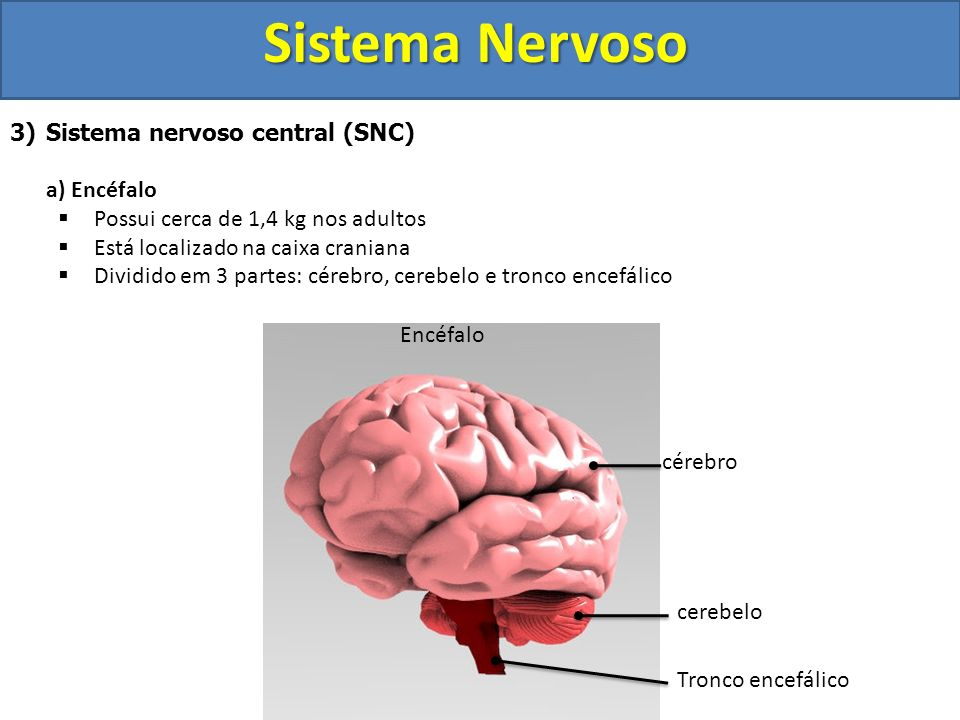 Sistema Nervoso Sistema nervoso central (SNC) a) Encéfalo