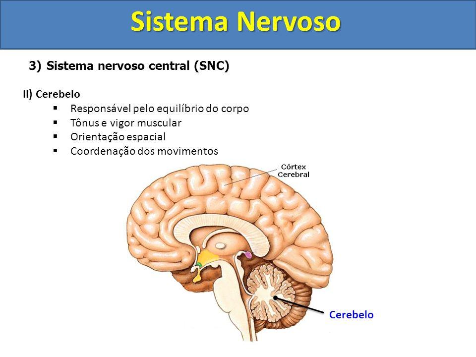 Sistema Nervoso Sistema nervoso central (SNC) II) Cerebelo