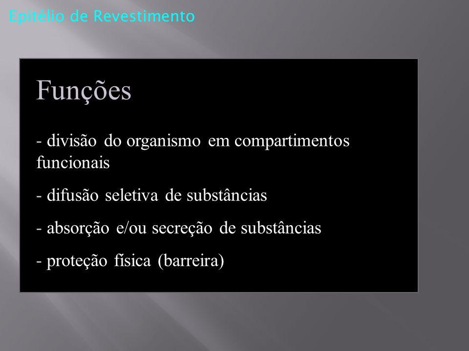 Funções - divisão do organismo em compartimentos funcionais