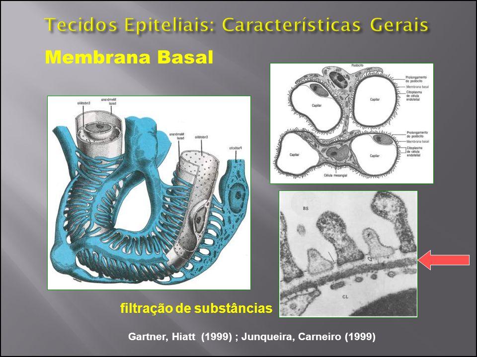 Tecidos Epiteliais: Características Gerais