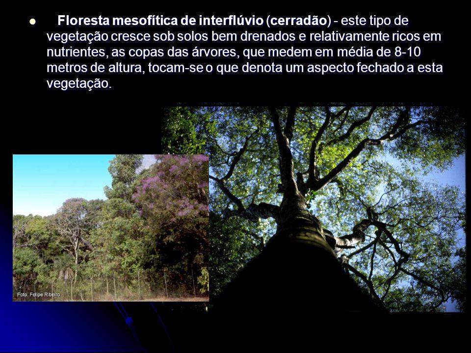 Floresta mesofítica de interflúvio (cerradão) - este tipo de vegetação cresce sob solos bem drenados e relativamente ricos em nutrientes, as copas das árvores, que medem em média de 8-10 metros de altura, tocam-se o que denota um aspecto fechado a esta vegetação.