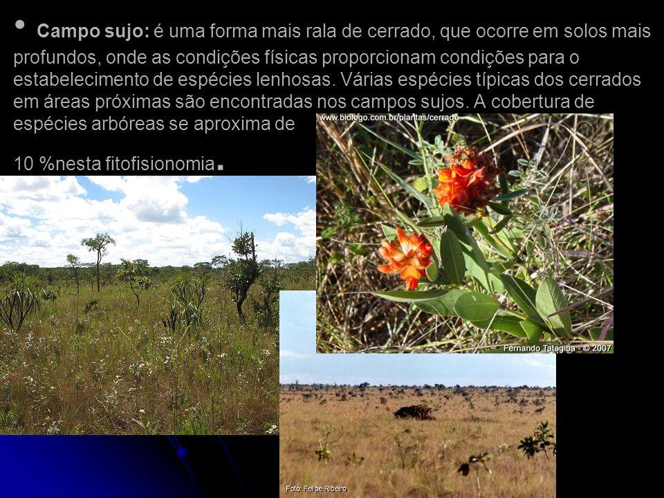 Campo sujo: é uma forma mais rala de cerrado, que ocorre em solos mais profundos, onde as condições físicas proporcionam condições para o estabelecimento de espécies lenhosas. Várias espécies típicas dos cerrados em áreas próximas são encontradas nos campos sujos. A cobertura de espécies arbóreas se aproxima de 10 %nesta fitofisionomia.
