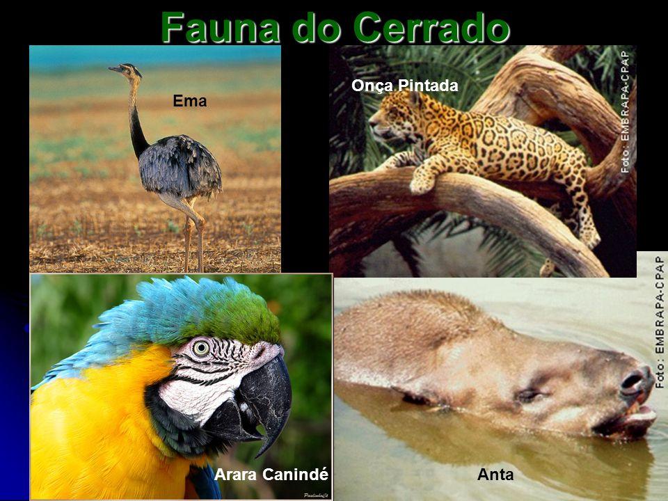Fauna do Cerrado Onça Pintada Ema Arara Canindé Anta