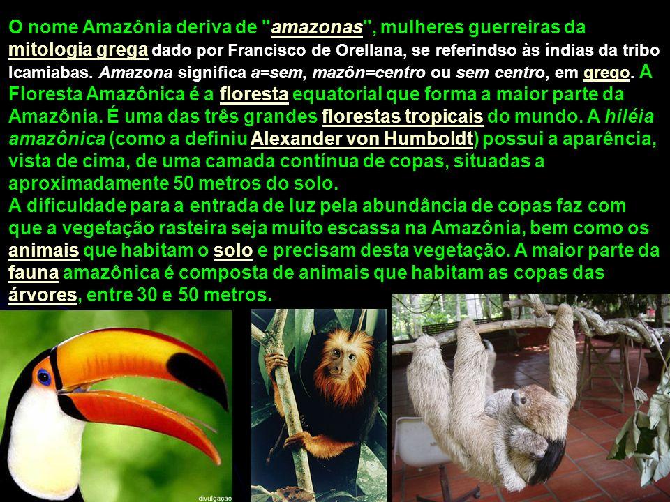 O nome Amazônia deriva de amazonas , mulheres guerreiras da mitologia grega dado por Francisco de Orellana, se referindso às índias da tribo Icamiabas. Amazona significa a=sem, mazôn=centro ou sem centro, em grego. A Floresta Amazônica é a floresta equatorial que forma a maior parte da Amazônia. É uma das três grandes florestas tropicais do mundo. A hiléia amazônica (como a definiu Alexander von Humboldt) possui a aparência, vista de cima, de uma camada contínua de copas, situadas a aproximadamente 50 metros do solo.