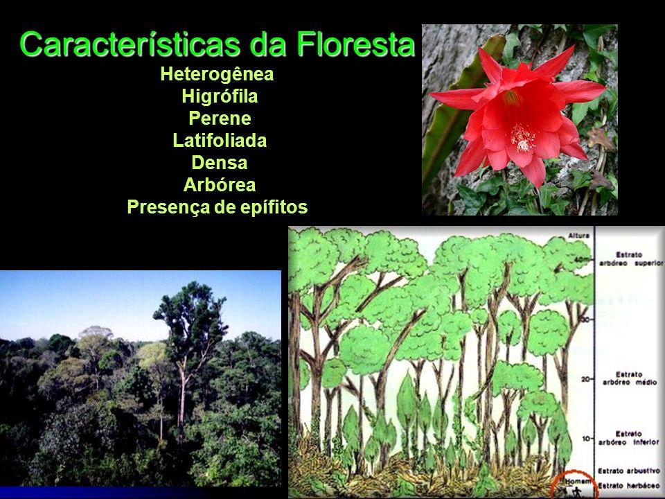 Características da Floresta Heterogênea Higrófila Perene Latifoliada Densa Arbórea Presença de epífitos