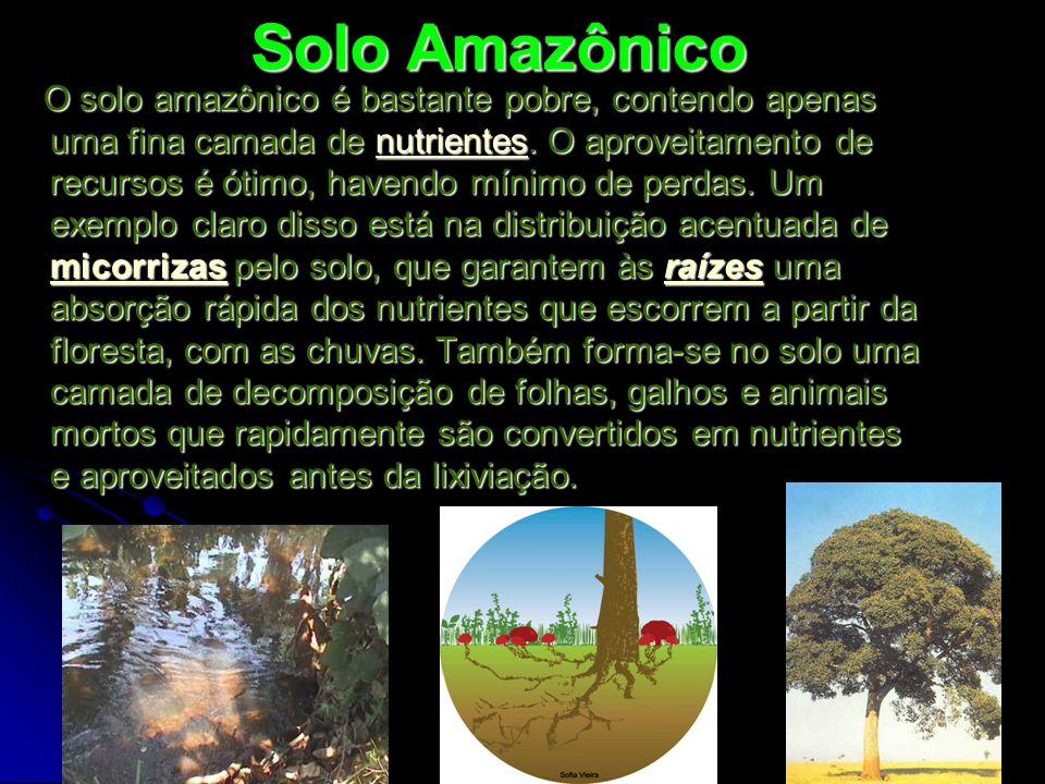 Solo Amazônico