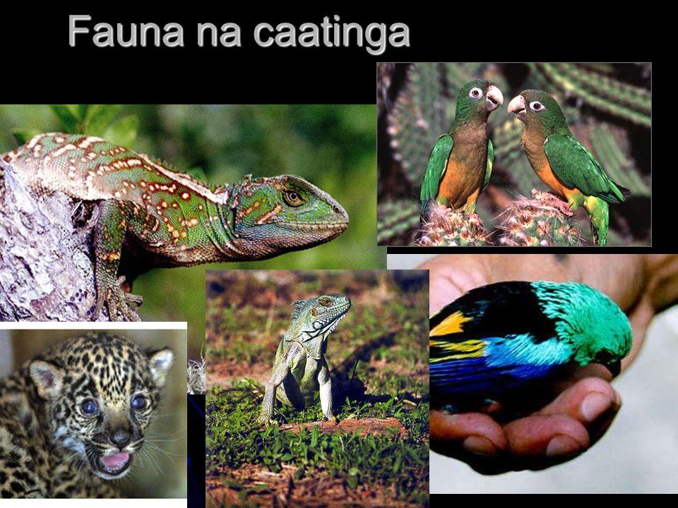 Fauna na caatinga