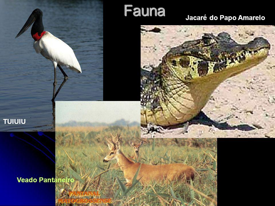 Fauna Jacaré do Papo Amarelo TUIUIU Veado Pantaneiro