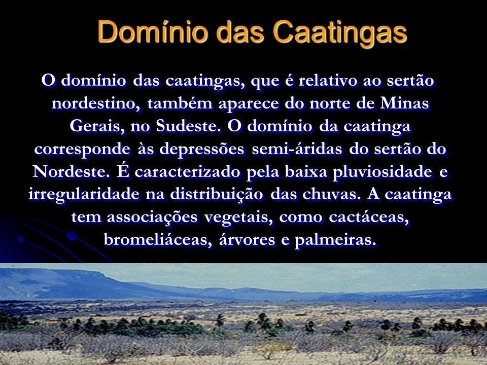 Domínio das Caatingas