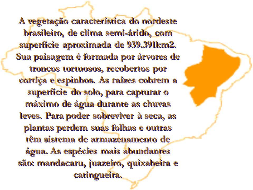 A vegetação característica do nordeste brasileiro, de clima semi-árido, com superfície aproximada de 939.391km2.
