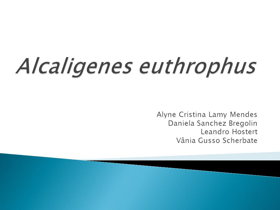 Alcaligenes euthrophus