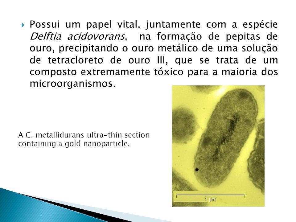 Possui um papel vital, juntamente com a espécie Delftia acidovorans, na formação de pepitas de ouro, precipitando o ouro metálico de uma solução de tetracloreto de ouro III, que se trata de um composto extremamente tóxico para a maioria dos microorganismos.