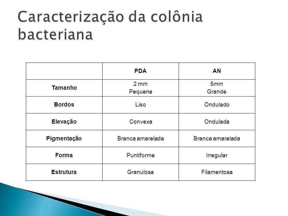 Caracterização da colônia bacteriana