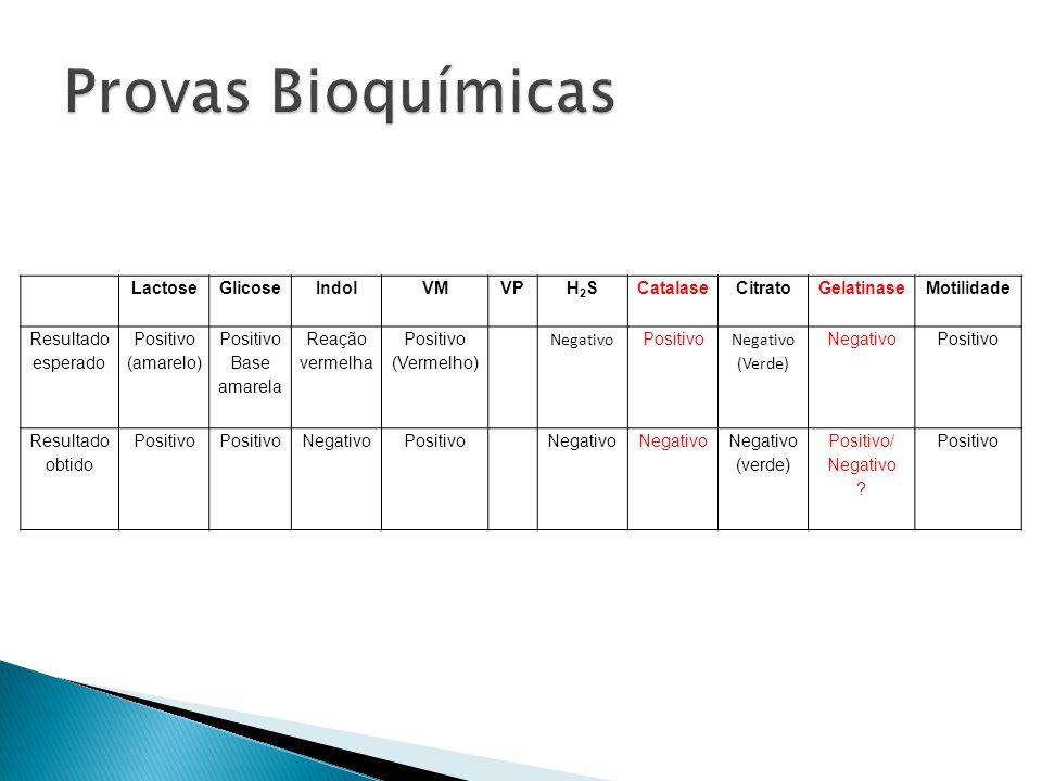 Provas Bioquímicas Lactose Glicose Indol VM VP H2S Catalase Citrato