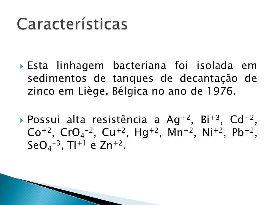 Características Esta linhagem bacteriana foi isolada em sedimentos de tanques de decantação de zinco em Liège, Bélgica no ano de 1976.